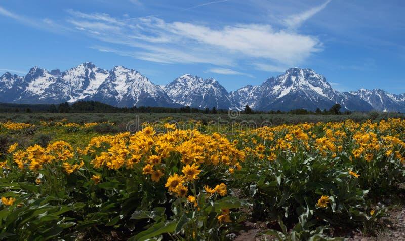 Wildflowers in Grote Tetons stock afbeeldingen