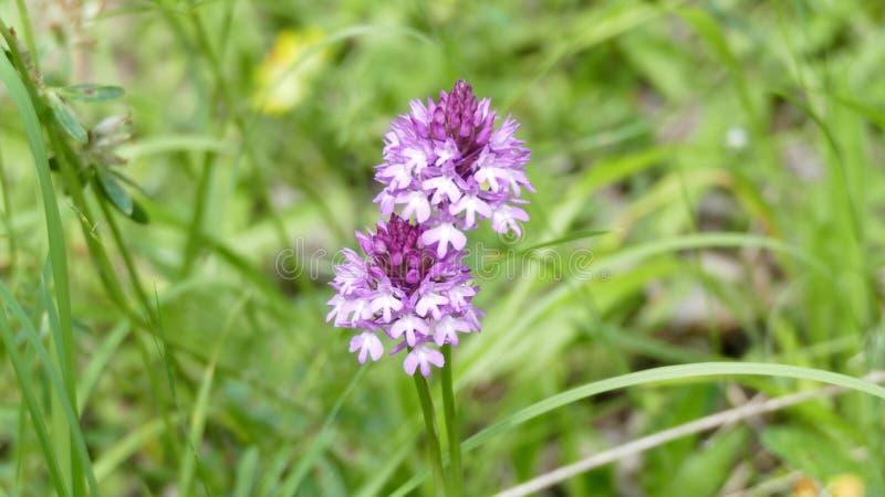 Wildflowers in het hout royalty-vrije stock fotografie