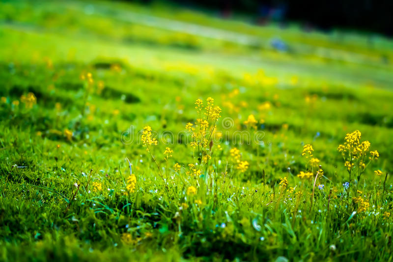 Wildflowers on the hillside stock photo