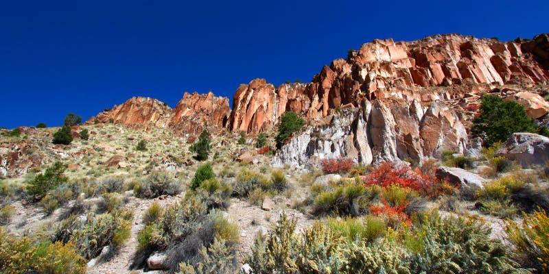 Wildflowers i Skaliste falezy Utah fotografia royalty free