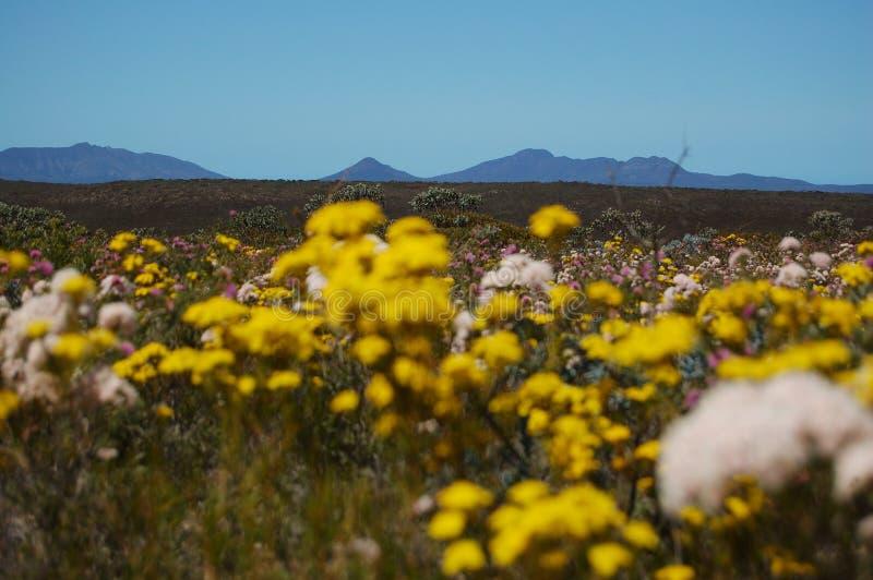 Wildflowers im Fitzgerald-Fluss-Nationalpark lizenzfreie stockbilder