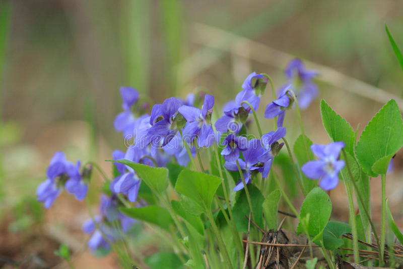 Wildflowers im Wald stockbild