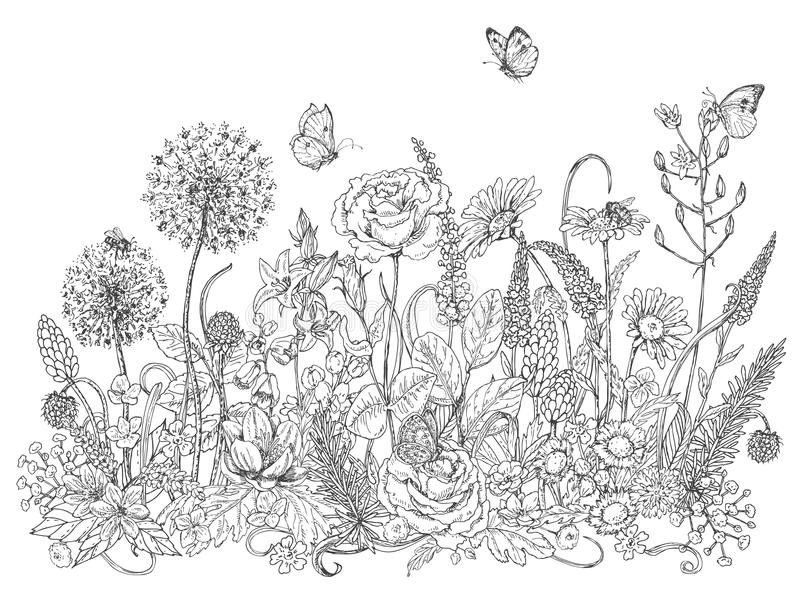 Wildflowers And Insects Sketch Stock Vector