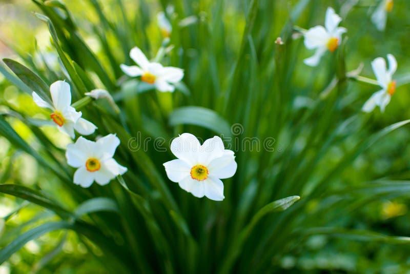 Wildflowers jaunes, blancs et oranges images libres de droits