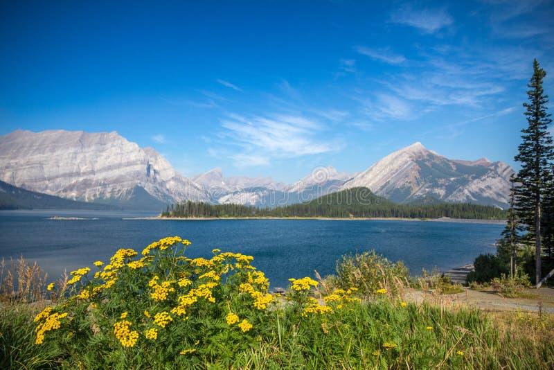 Wildflowers jaunes et lac supérieur bleu Kananaskis, Alberta, Canada images stock