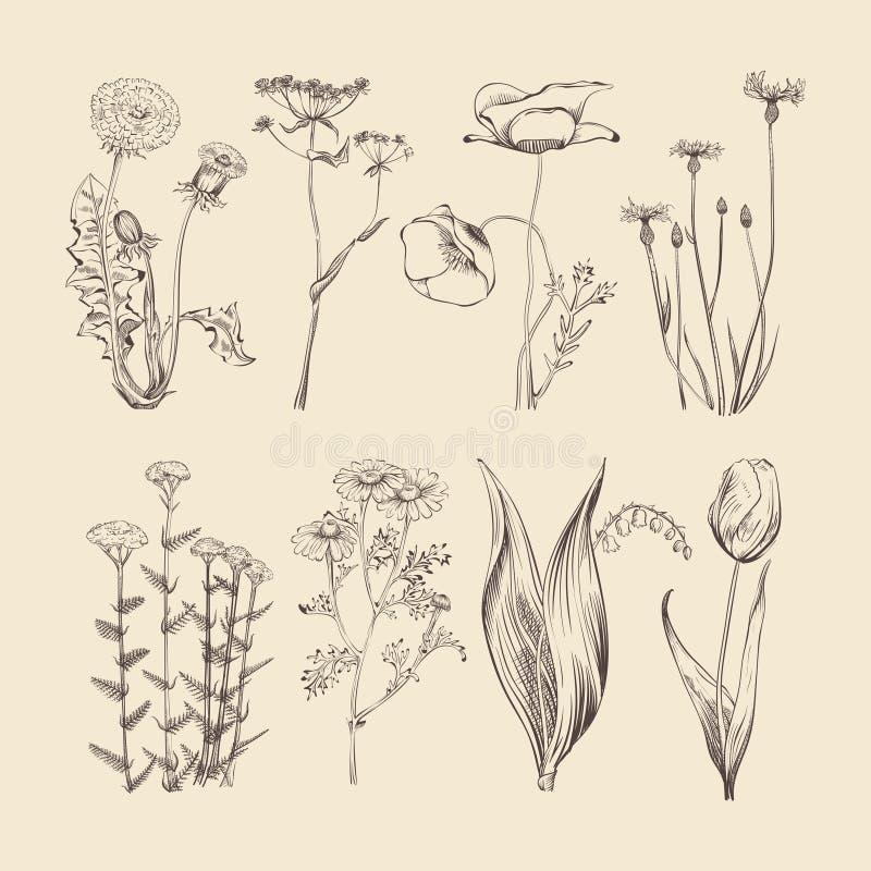 Wildflowers, kruiden en bloemen De lente of de zomer botanische vectorinzameling royalty-vrije illustratie