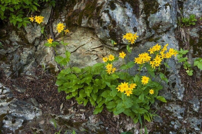Wildflowers langs een Bergsleep royalty-vrije stock foto