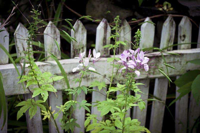 Wildflowers le long de frontière de sécurité images libres de droits