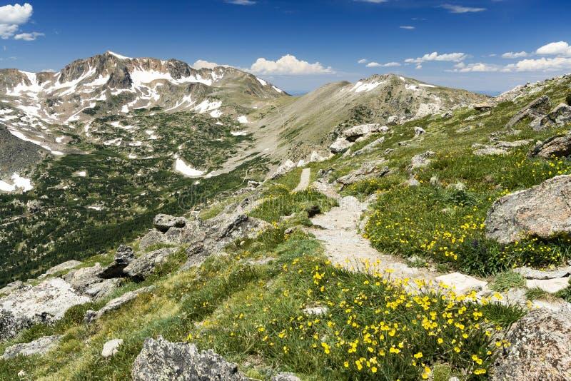 Wildflowers le long de sentier de randonnée en montagnes du Colorado images stock