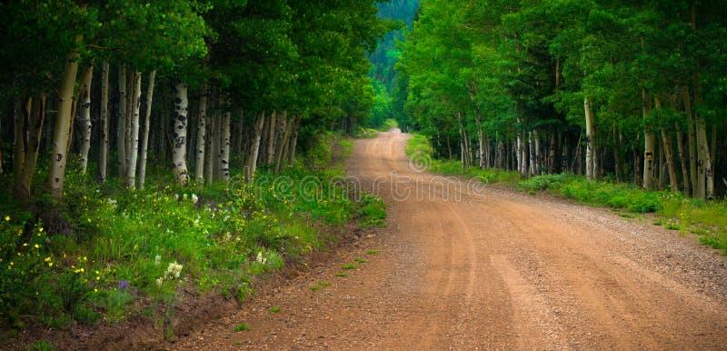 Wildflowers a lo largo de un camino del condado de Colorado fotografía de archivo libre de regalías