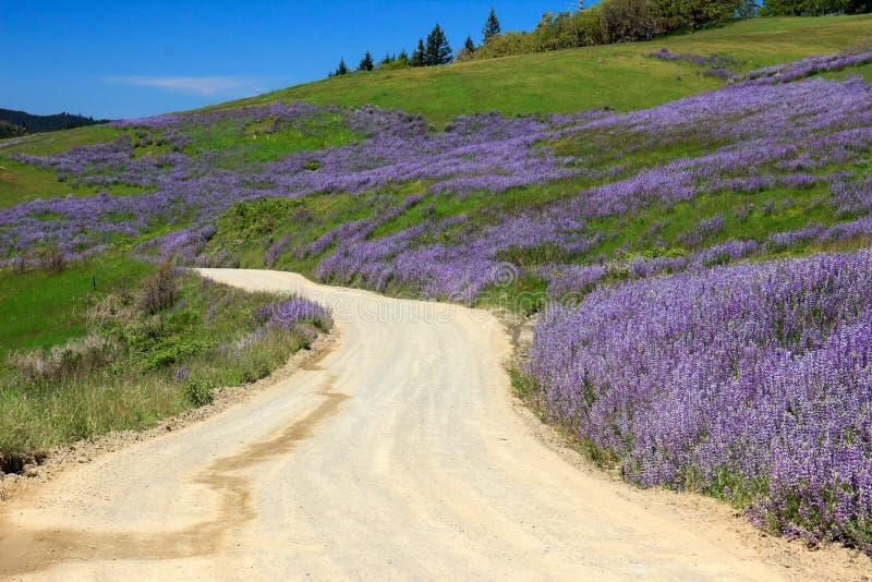 Wildflowers Lupine die de hellingen langs een oude landweg behandelen royalty-vrije stock foto