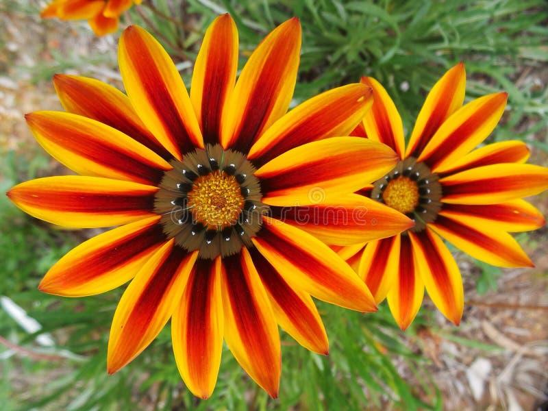 Wildflowers macro images libres de droits
