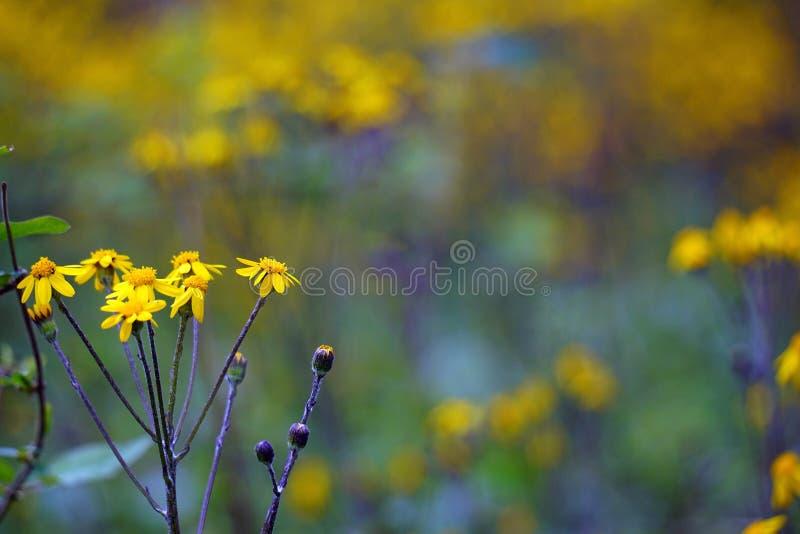 Wildflowers macros de la primavera foto de archivo