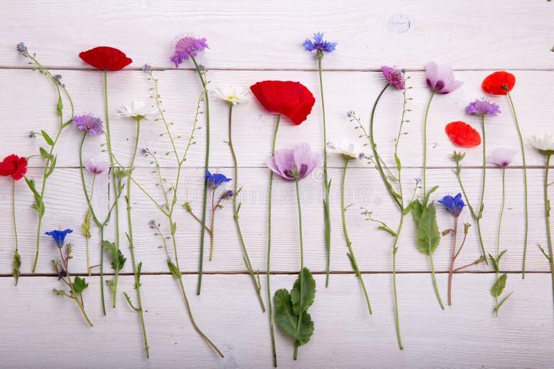 Wildflowers - maczek, chamomile, chabrowy, scabiosis zdjęcie royalty free
