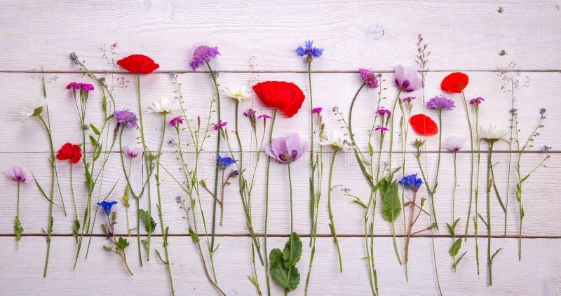 Wildflowers - maczek, chamomile, chabrowy, scabiosis obrazy royalty free