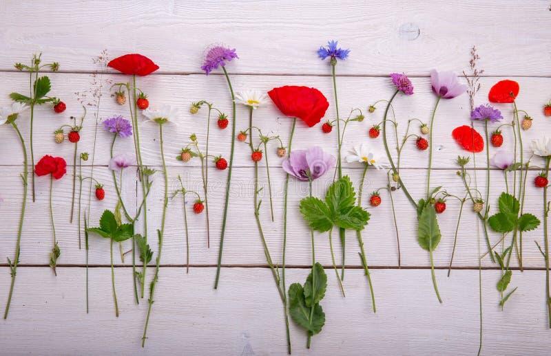 Wildflowers - maczek, chamomile, chabrowy, scabiosis zdjęcie stock