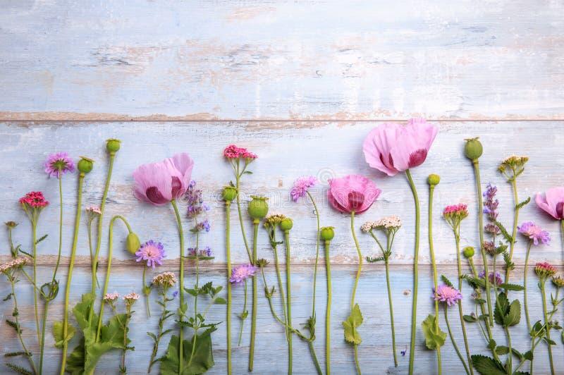 Wildflowers makowi na drewnianym tle zdjęcie stock