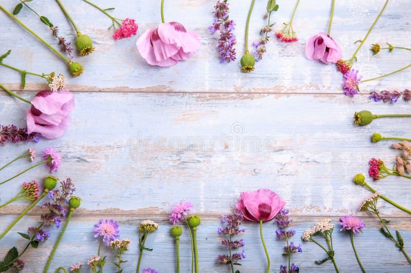 Wildflowers makowi na drewnianym tle fotografia royalty free