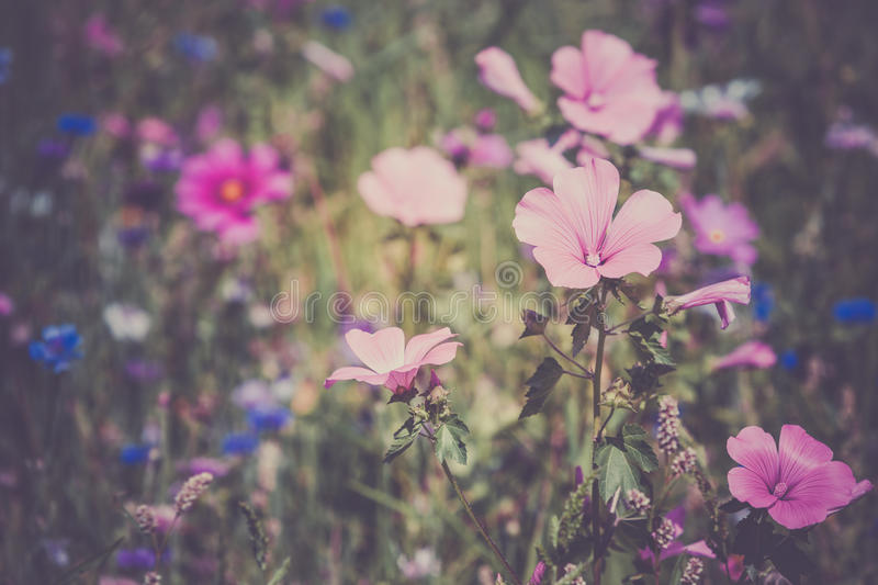 Wildflowers on a meadow royalty free stock photos
