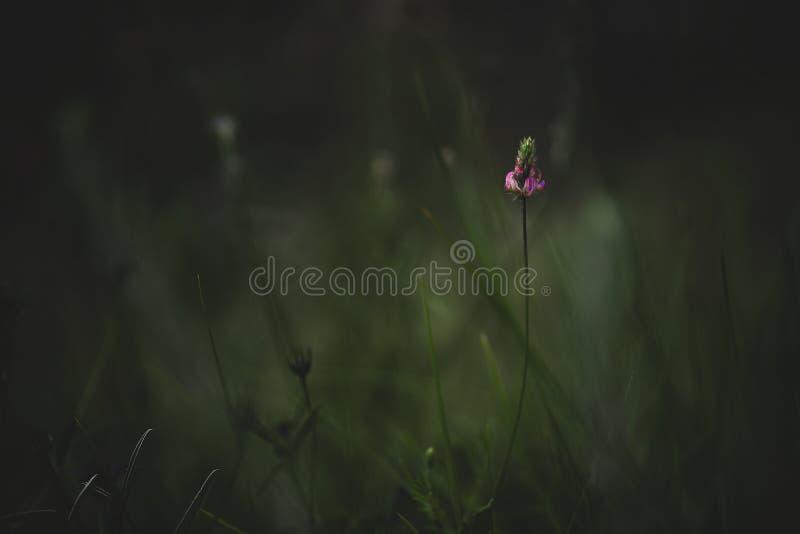 Wildflowers Mediterranei immagine stock libera da diritti