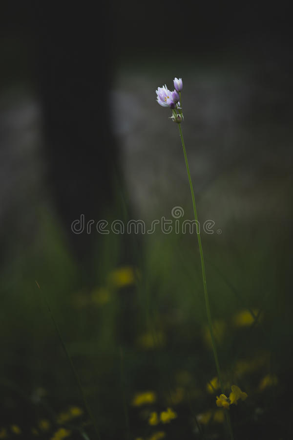 Wildflowers Mediterranei fotografia stock