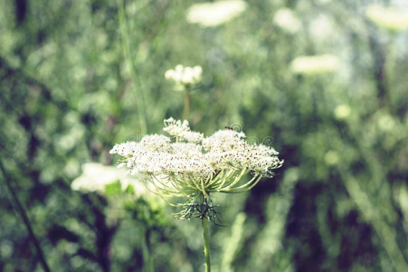 Wildflowers met de groene achtergrond van de bladerentextuur in zonnige dag, installaties op een weide royalty-vrije stock afbeelding