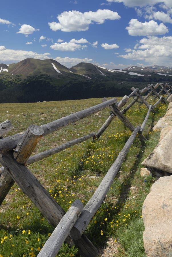Wildflowers in montagne rocciose del Colorado immagini stock libere da diritti
