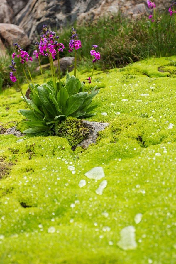 Wildflowers, musgo, e chuva fotografia de stock