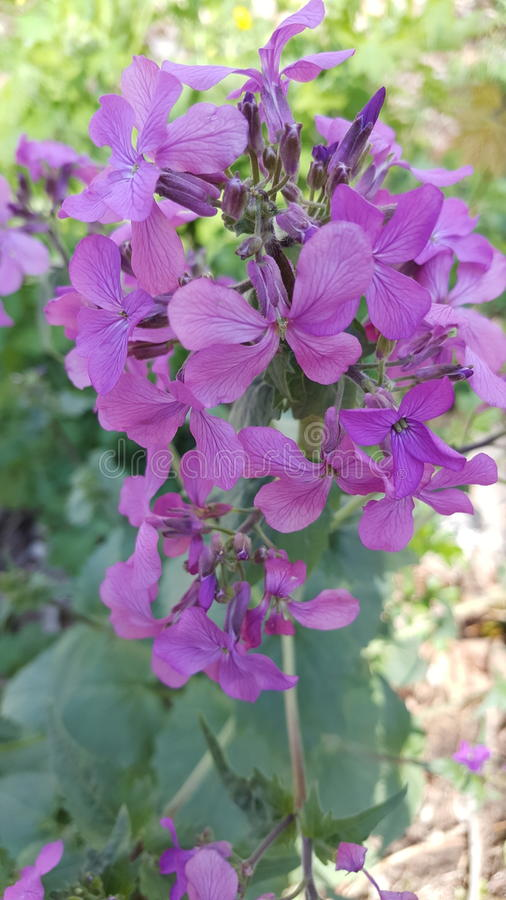 Wildflowers in my backyard stock photography