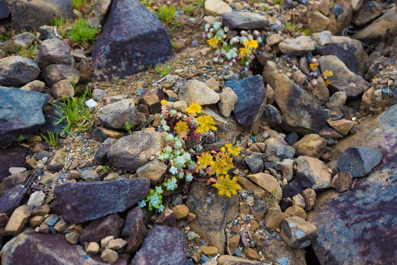 Wildflowers na praia de DeMartin imagens de stock