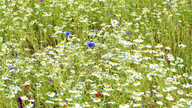 A wildflowers in the meadows stock photo