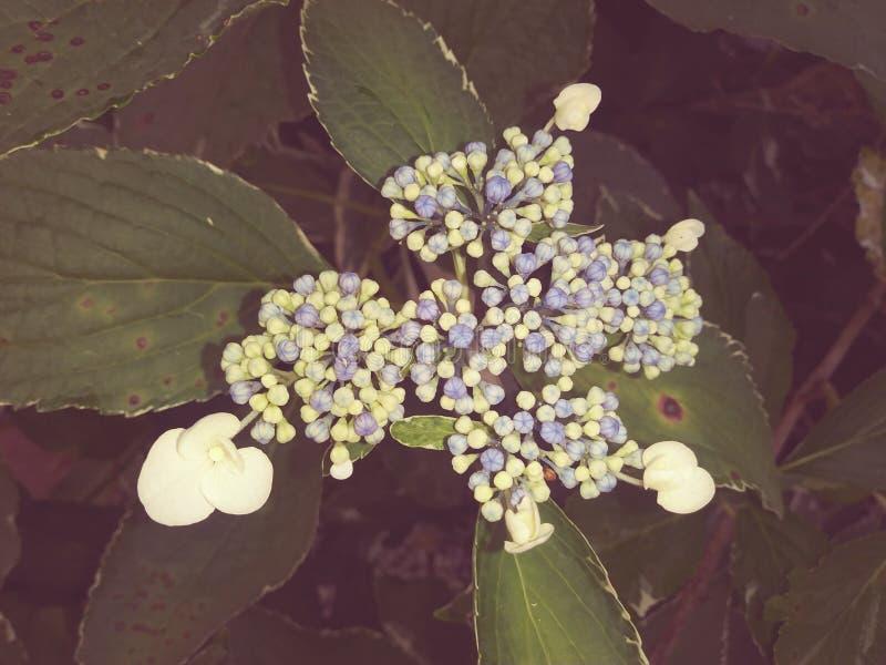 Wildflowers nell'Ohio fotografia stock