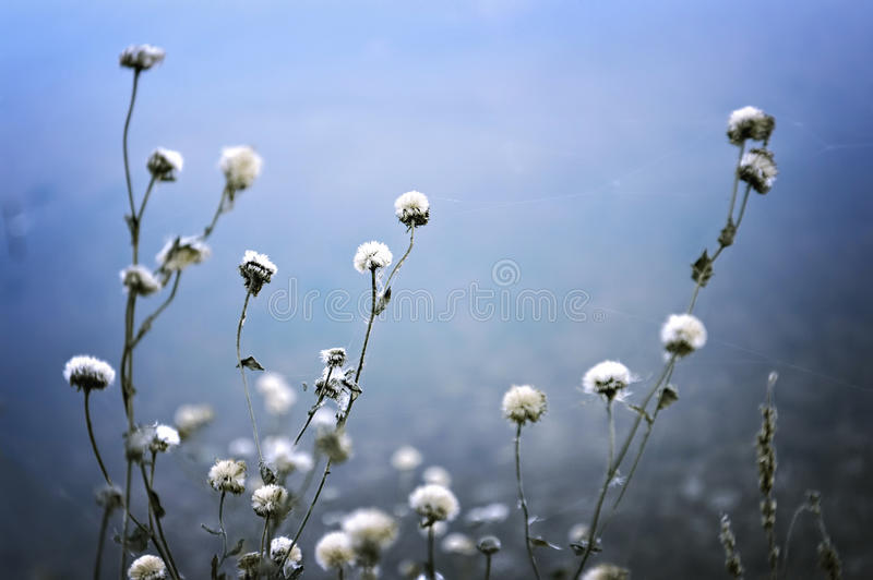 Wildflowers no fundo azul foto de stock