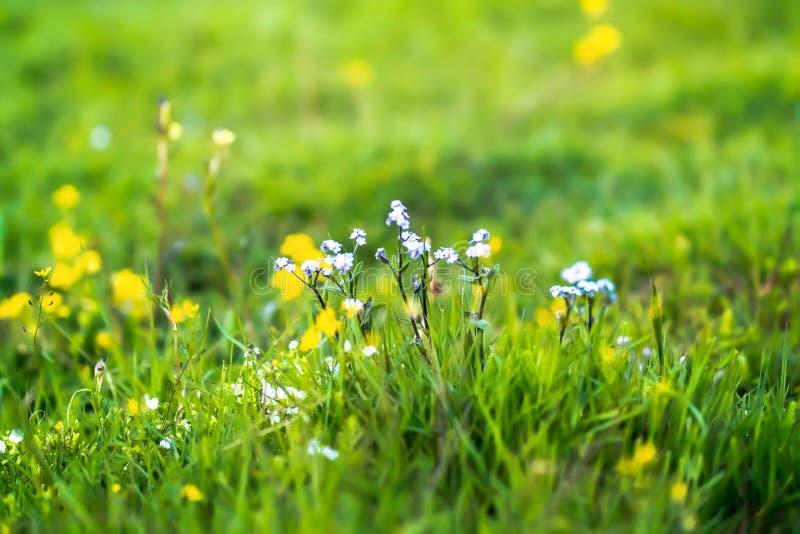 Wildflowers no montanhês fotografia de stock