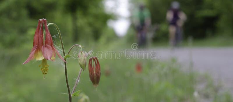 Wildflowers of Ontario stock photo
