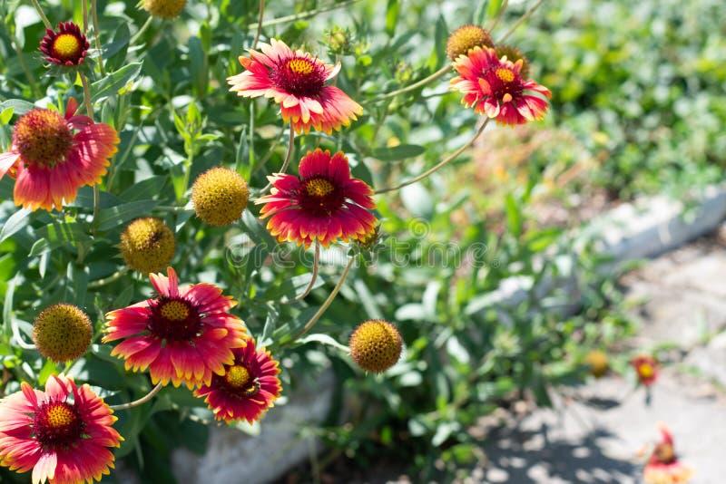Wildflowers op een achtergrond van groen park De gele en oranje bloemen sluiten omhoog in het park royalty-vrije stock fotografie