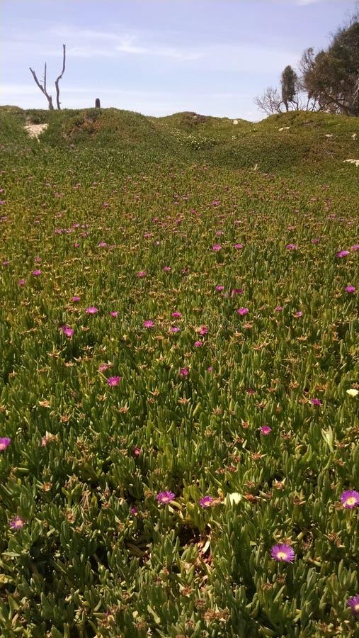 Wildflowers op het Strand stock foto's