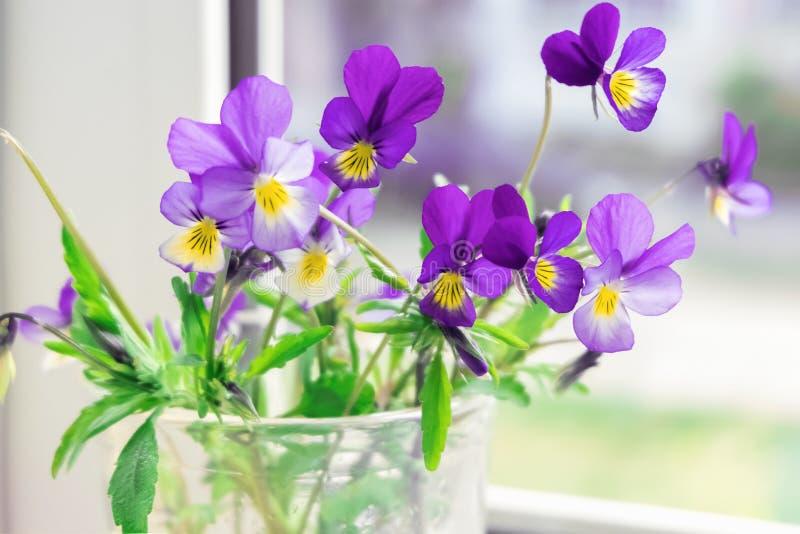 Wildflowers Pansies on the windowsill. The flowers on the window.  stock photos
