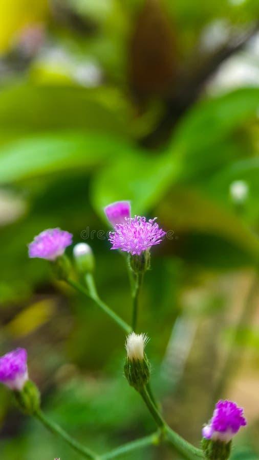 Wildflowers pequenos imagem de stock