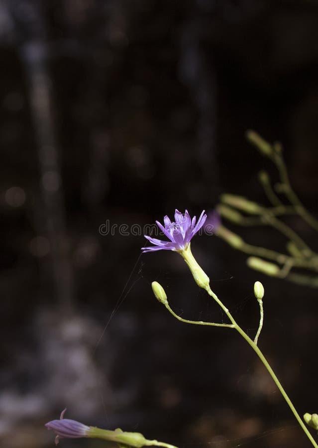 Wildflowers pequenos azuis Com folhas verdes Vista lateral H? um lugar para o texto fotos de stock royalty free
