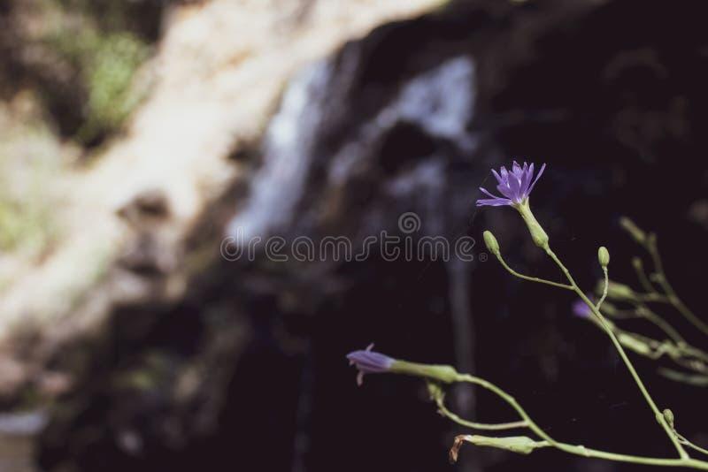 Wildflowers pequenos azuis Com folhas verdes Vista lateral H? um lugar para o texto fotografia de stock royalty free