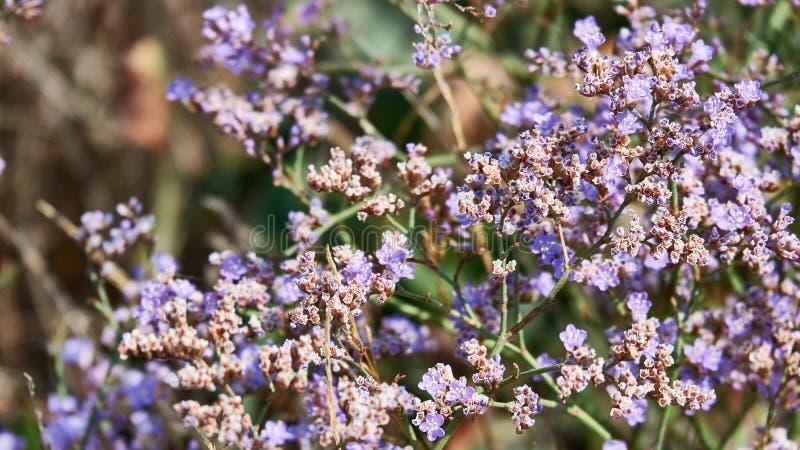 Wildflowers piękni, lato kwiaty, dzicy obrazy royalty free