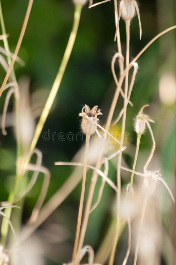 Wildflowers and plants on meadow in bloom on blurry background.  royalty free stock photography