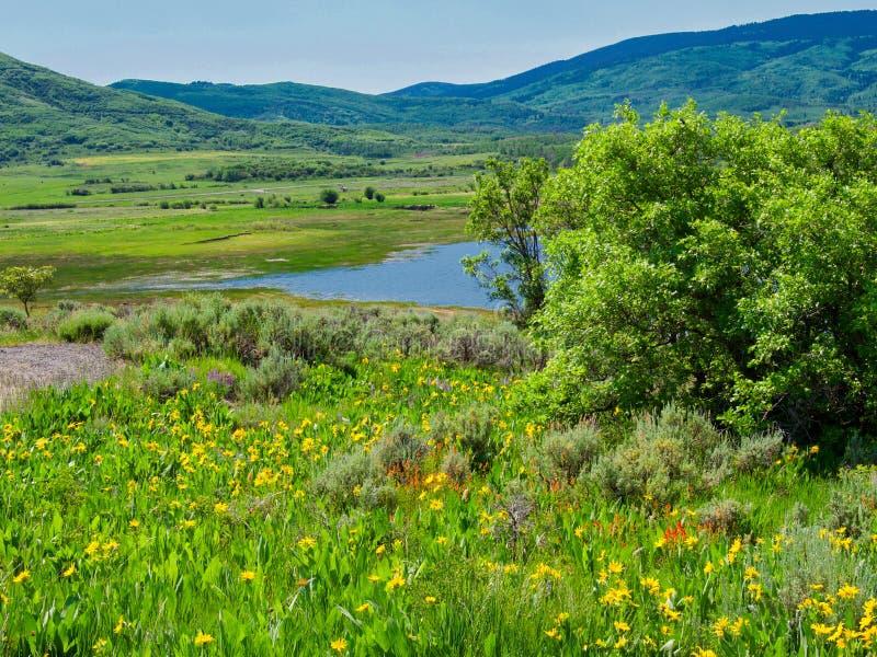 Wildflowers przy 8000 ciekami obrazy stock