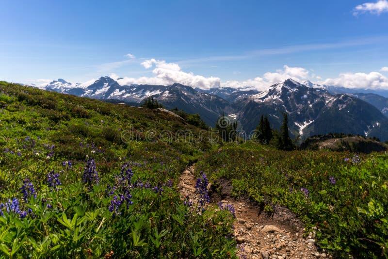 Wildflowers przy Północnym kaskada parkiem narodowym w lecie obraz stock