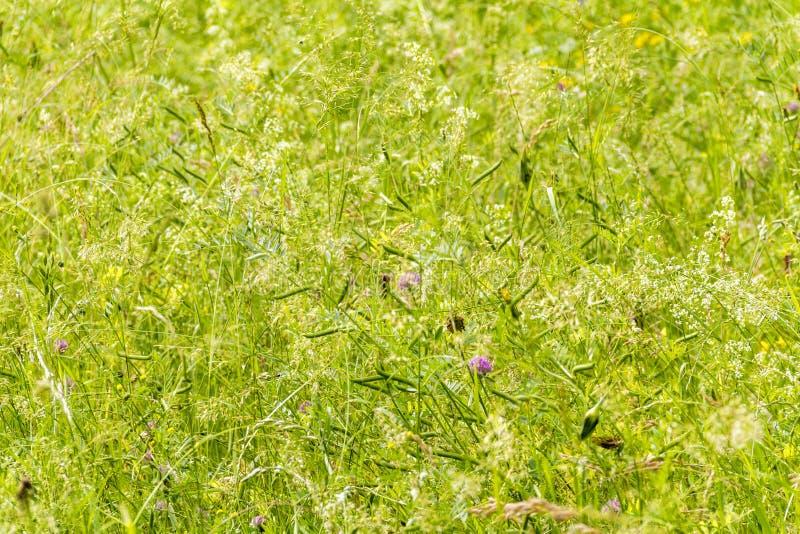 Wildflowers przy wiosna czasem obrazy royalty free