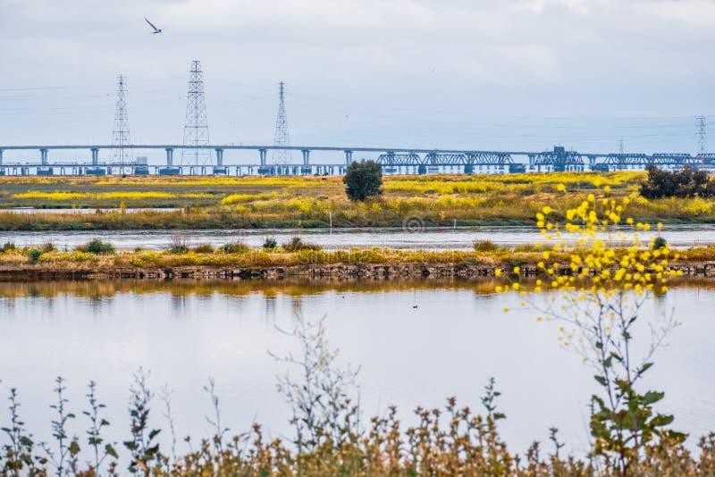 Wildflowers que florescem na linha costeira de área de San Francisco Bay sul; Ponte de Dumbarton visível no fundo; Mountain View, foto de stock royalty free