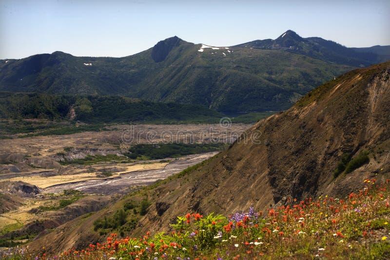 Wildflowers-Rückstand-Feld-Mount Saint Helens lizenzfreies stockbild