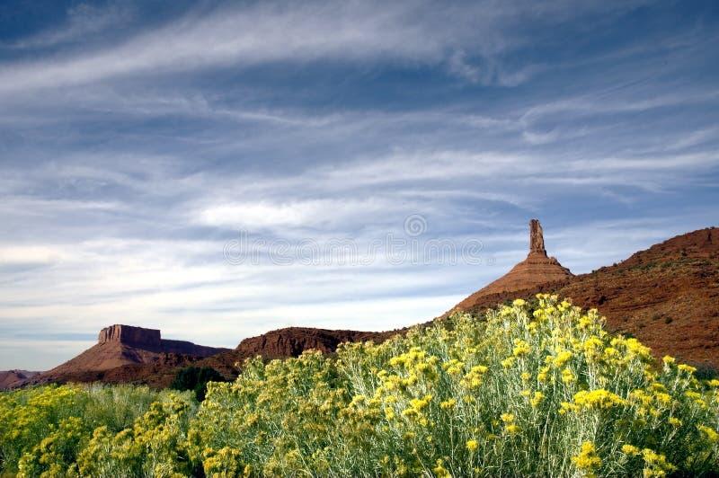 Wildflowers and Redrock stock photos