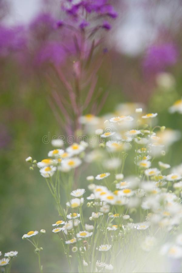 Wildflowers in Russland lizenzfreies stockfoto